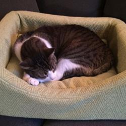pet-bed2.jpg